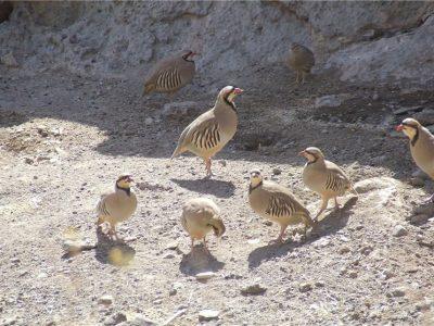 دستگیری متخلفان شکار و صید در شهرستان بهاباد