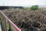 کشف ۲ هزار و ۹۰۰ کیلو ریشه شیرین بیان قاچاق در بافق